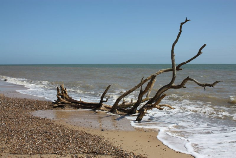 Covehithe tree in the sea