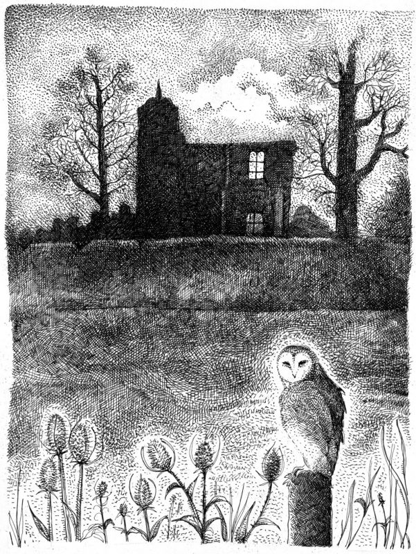 Barn Owl of Baconsthorpe
