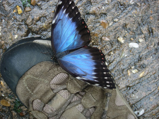 morpho-on-boot2.jpg