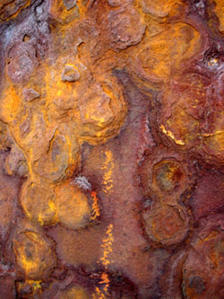 rust-on-pier-pole