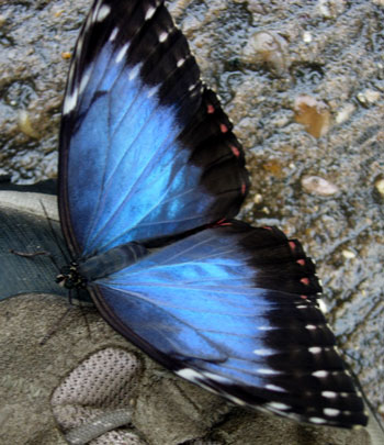 Morpho on boot