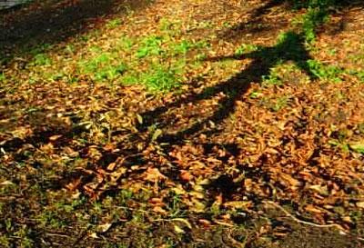 Dancing shadow on leaves