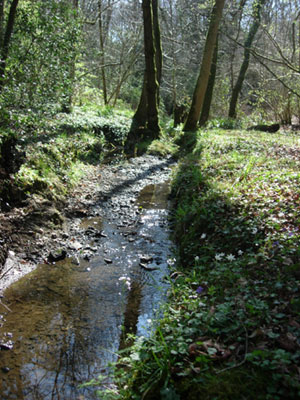 Stream at Ebernoe Common