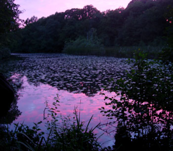 Furnace Pond at Ebernoe