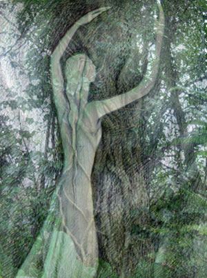 Embracing the Tree of life