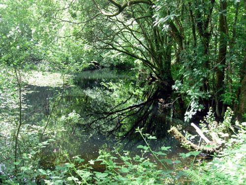 The Lake Pen Pynfarch