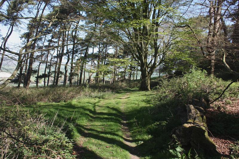 Pentridge Hill