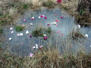 Chalybeate Spring near Sharpthorne
