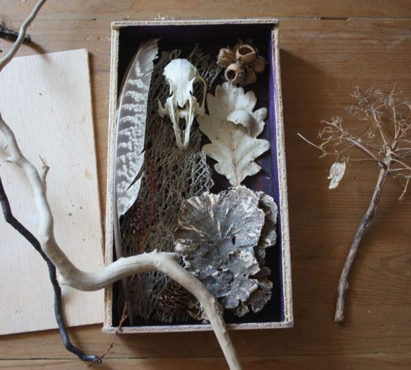Box of Natural Finds