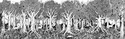 Daytime forest scene