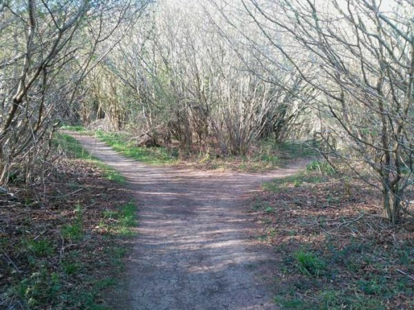 Forked path at Martin Down NR