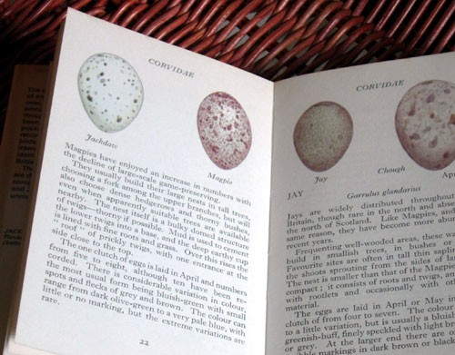 Magpie Page in Egg Book