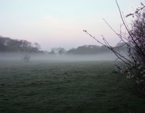 Misty Field at Sunrise