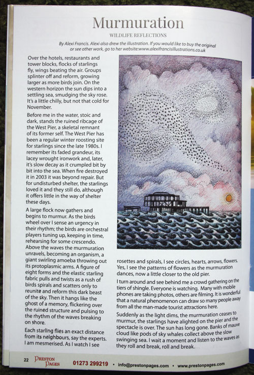 Murmuration in The Preston Pages