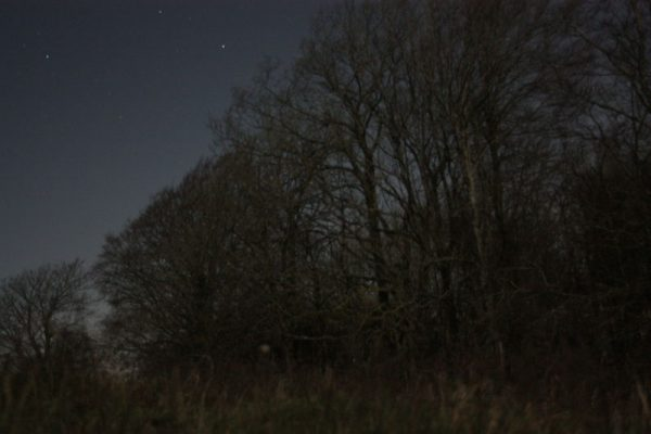 Night Woods - Wolstonbury Hill