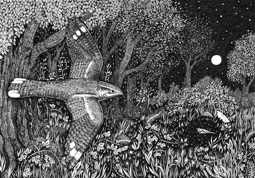 Nightjar in pen and ink