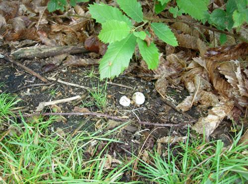 Nightjar Nest Site