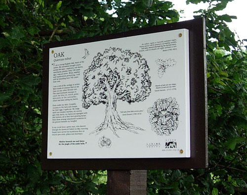 Oak Interpretation Panel installed on the trail