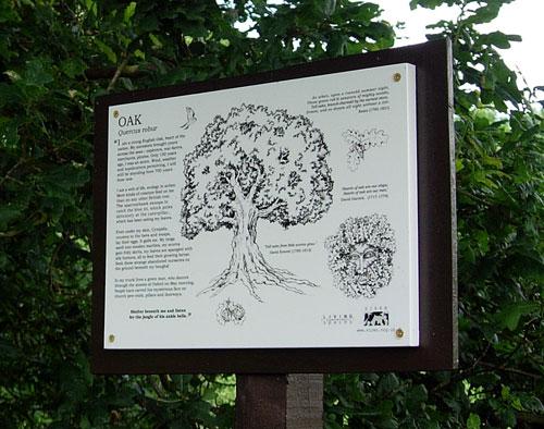 Oak Interpretation Panel installed on the trail