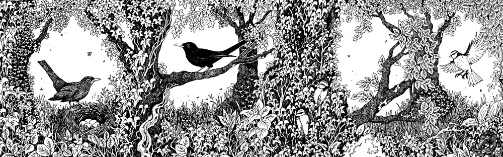 Owls and Blackbirds Concertina Card