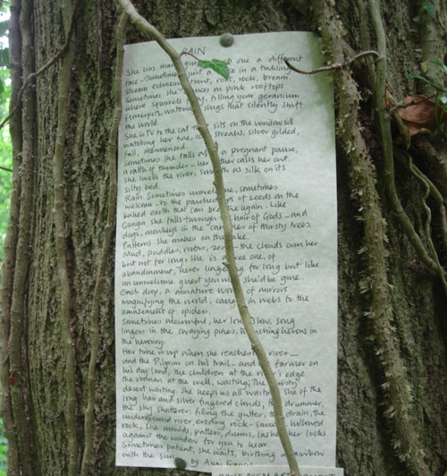 Rain Poem on Tree