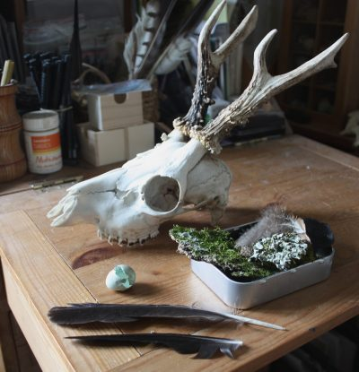 Roe deer skull etc