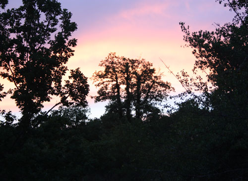 The Nightjar Tree