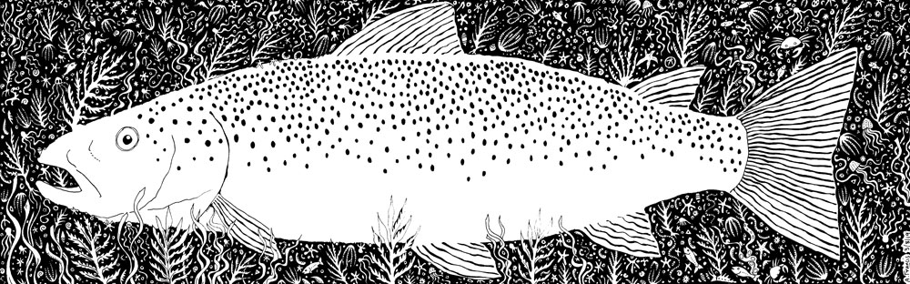 Sea Trout Concertina Card - Front