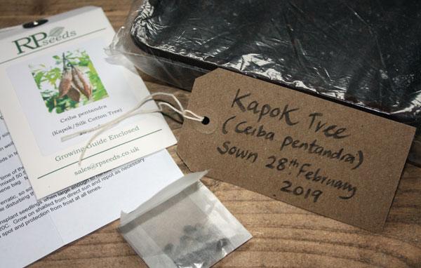Kapok seeds planted.