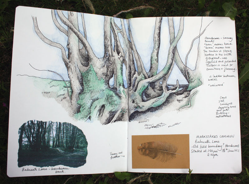 Markstakes Common hornbeams sketchbook