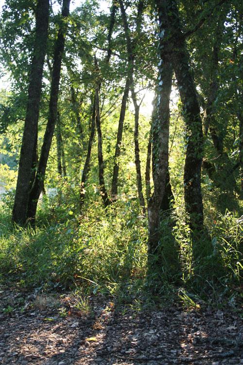 Morning Light Through Trees
