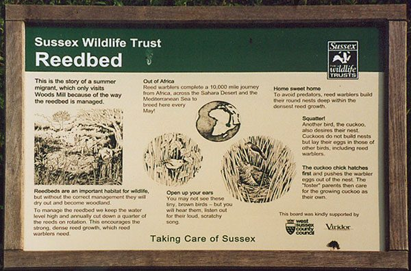 Interpretation Board - Reedbed