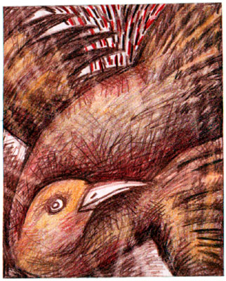 Bathing Crow
