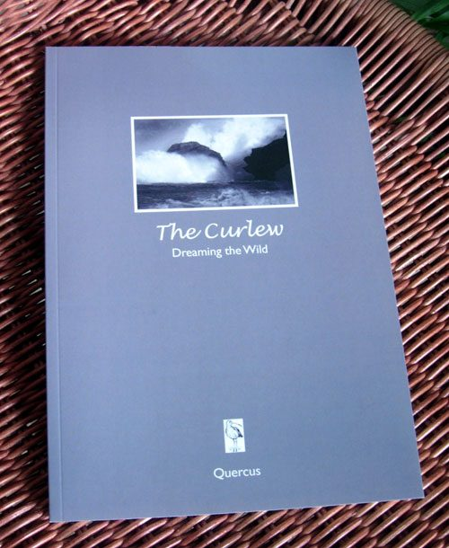 The Curlew