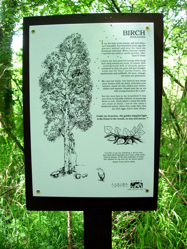 Birch Interpretation Panel